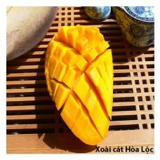 Xoài cát Hòa Lộc & cách chọn chính xác trái cây ăn quả từ nhà vườn ven sông Cửu Long