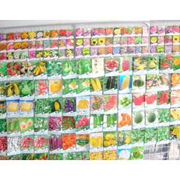 Tìm đại lý phân phối hạt giống cây cảnh